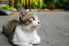 Een leuk klein katje dat de hemel bekijkt Stock Afbeelding