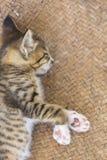 Een leuk klein katje die de camera bekijken royalty-vrije stock fotografie