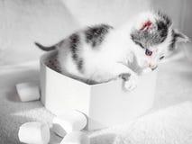 Een leuk klein katje die in hartdoos sittting zoals een gift op een wit tapijt op zon Royalty-vrije Stock Foto