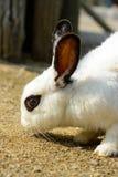 Een leuk klein wit konijn. Stock Foto