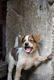 Een leuk speels puppy met het glimlachen gezicht Royalty-vrije Stock Afbeelding