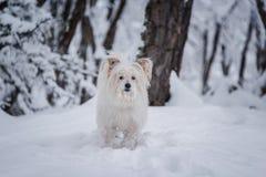 Een leuk wit puppy in een bos royalty-vrije stock foto