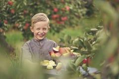 Een leuke, glimlachende jongen plukt appelen in een appelboomgaard en houdt een appel stock afbeeldingen