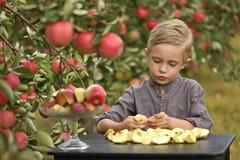 Een leuke, glimlachende jongen plukt appelen in een appelboomgaard en houdt een appel stock fotografie