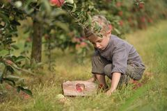 Een leuke, glimlachende jongen plukt appelen in een appelboomgaard en houdt een appel stock foto's