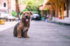 Een leuke harige verdwaalde hond plakt uit zijn tong, zit op concrete flo royalty-vrije stock fotografie