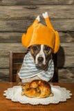 Een leuke hond die voor Diner bedelen royalty-vrije stock foto's