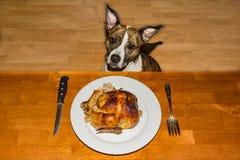Een leuke hond die voor Diner bedelen stock foto