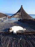 Een leuke kat legt op een strodak royalty-vrije stock foto's
