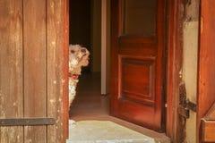 Een leuke kleine hond die bij de deuropening wacht stock foto's