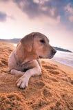 Een leuke kleine hond op het strand stock fotografie