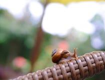Een leuke slak die op een poolbed lopen met zachte lichte tuinachtergrond in avondtijd Stock Foto's