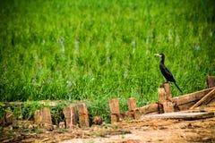 Een leuke vogelzitting alleen op een tak stock foto