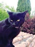 Een leuke zwarte verraste kat stock afbeelding