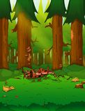 Een levende mooie groene wildernis met veel bomen en installaties royalty-vrije illustratie