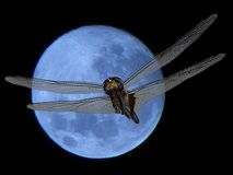 Een libel is een insect die tot de orde Odonata behoren, infraorder Anisoptera royalty-vrije stock afbeelding