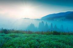 In een licht van sunrise_1 Stock Fotografie