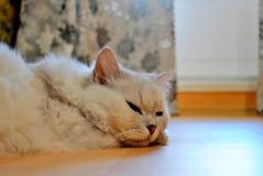 Een lichtgrijze kat dut op de vloer met half-closed ogen royalty-vrije stock afbeelding