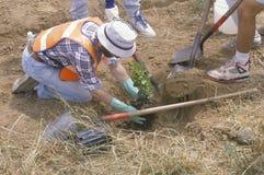Een lid van de Schone & Groene milieudiegroep de het Behoudskorpsen van Los Angeles plant een boom in een gat door een andere wor Stock Foto