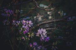 Een lieveheersbeestje Coccinellidae kruipt langs een pijnboomtak door wit-lilac weidebloemen die wordt omringd Donkere achtergron stock afbeeldingen