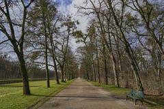 Een lijn van bomen langs een weg, een waterkanaal en een bos op de achtergrond royalty-vrije stock foto's