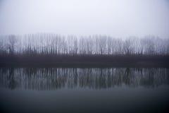 Een lijn van bomen naast denkt in de rivier op een mistige dag na Stock Foto
