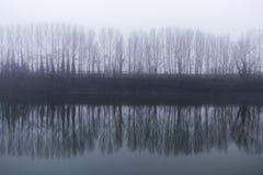 Een lijn van bomen naast denkt in de rivier op een mistige dag na Stock Foto's