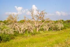 Een lijn van dode bomen Royalty-vrije Stock Afbeelding