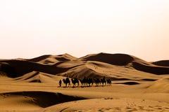 Een lijn van kamelen loopt in de woestijn Royalty-vrije Stock Foto's