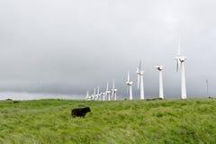 Een lijn van oude verlaten windturbines en een koe. Stock Foto