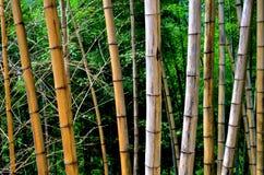 Een lijn van vernietigd bamboe stock afbeelding