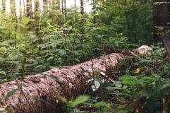 Een logboek van hout in het bos Royalty-vrije Stock Foto