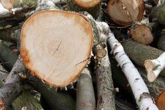 Een logboek van timmerhout op een stapel Stock Foto's