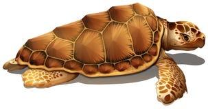Een loggerhead zeeschildpad stock illustratie