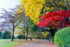 Een lokaal park met een blauw hemelwit betrekt een weg in de Herfst stock fotografie