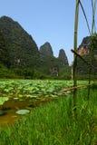 Een lotusbloemlandbouwbedrijf Stock Foto's