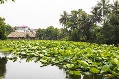 Een lotusbloemmeer in oud dorp in Hanoi Royalty-vrije Stock Fotografie