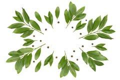 Een luchtfoto van baai vertakt zich als een kroon Groene lauriertakjes voor de zaken van het ecokoken Geïsoleerde baaitak en pepe stock foto