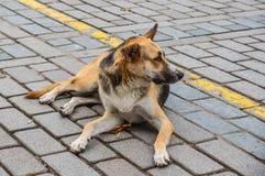 Een luie hond die op de straat liggen royalty-vrije stock foto's