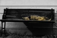 Een luie kat die in de zon lounging stock afbeeldingen