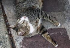 Een luie kat die op weg liggen royalty-vrije stock foto