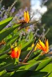Een macro die van een cactusblad wordt geschoten stock foto's