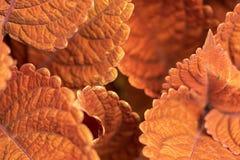 Een macro van Autumn Leaves wordt geschoten dat royalty-vrije stock fotografie