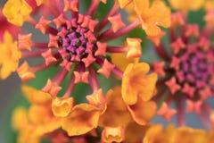 Een macro van een bloem wordt geschoten die royalty-vrije stock afbeelding