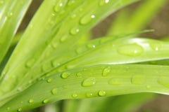 Een macro van waterdruppeltjes op blad Stock Foto's