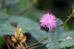 Een macrobeeld van een kleine bloem royalty-vrije stock foto
