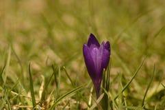 Een macrophotography van mooie eenzame bloem Royalty-vrije Stock Foto's