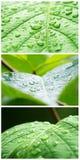 Een macroschot van natte bladeren Royalty-vrije Stock Afbeelding
