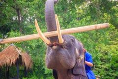 Een mahoutzitting op een olifants dragend logboek stock afbeeldingen