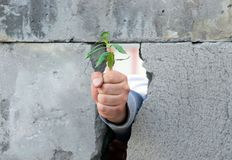 Een man hand, die in een vuist wordt dichtgeklemd, de onderbrekingen door een muur van grijze concrete blokken en geven een jonge royalty-vrije stock afbeelding